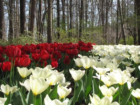 садовые работы в мае_фото