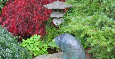декоративно-лиственные растения_фото
