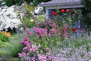 сад в июне_фото