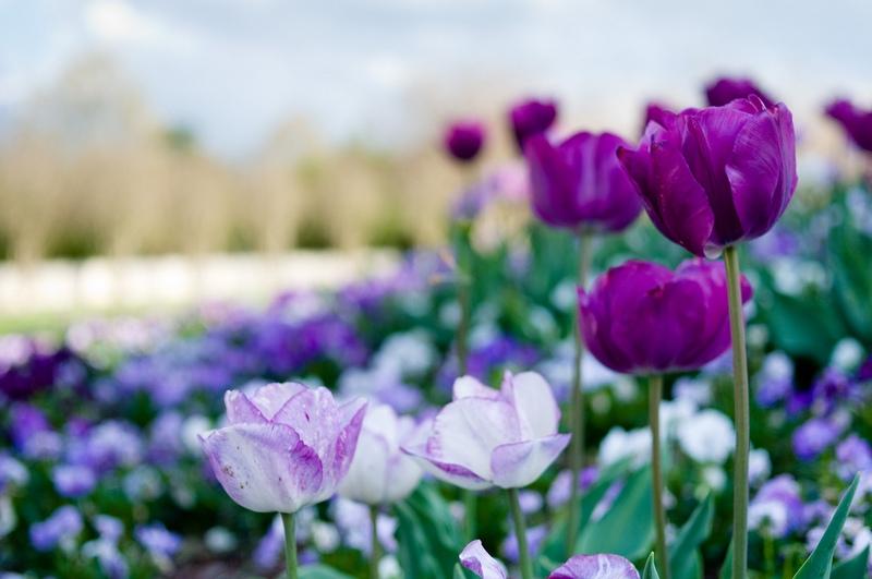 Голубые цветы Фото голубых цветов для вашего сада