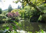 Садовые растения для влажных участков