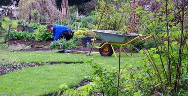 садовник в цветнике