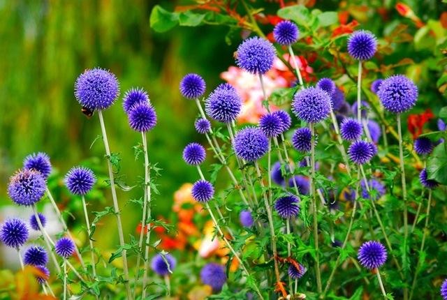Многолетние цветы высокорослые