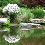 берег садового пруда