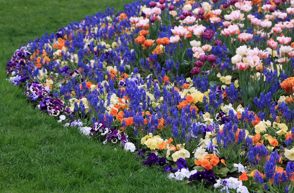 прорывается между какие цветы садить весной фото и название усилия