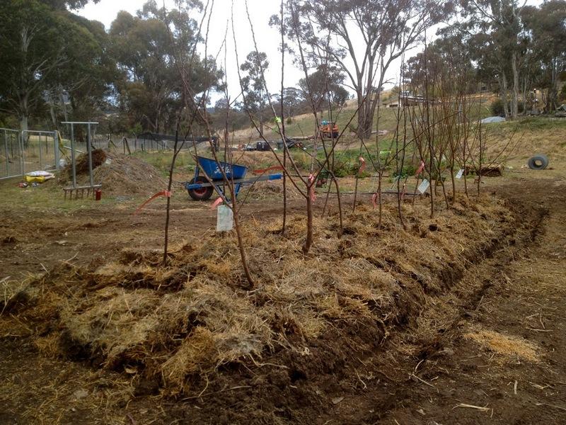 Как сажать деревья в глинистую почву 73