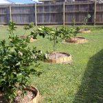 клумбы для плодовых деревьев
