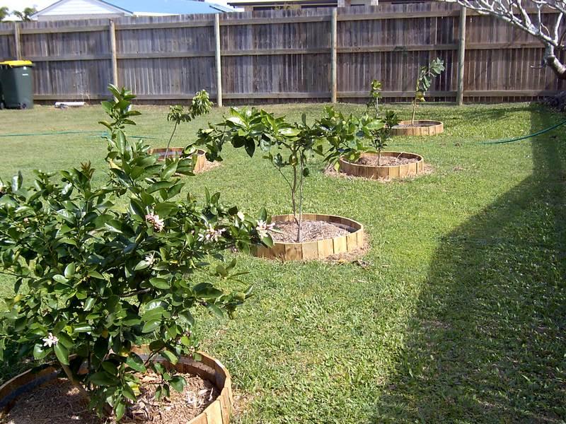 Деревья и кустарники в огороде