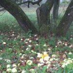 букетная посадка деревьев фото
