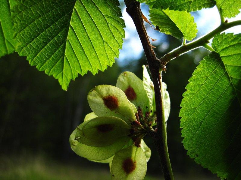 Стратификация: как прорастить семена деревьев и кустарников?