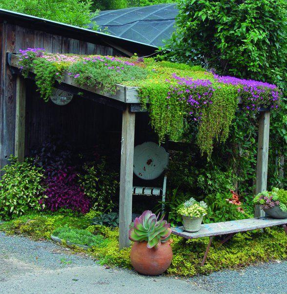 озеленение навеса
