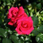 Роза Авила Палас