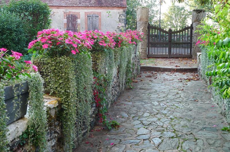 розы и дихондра в композиции