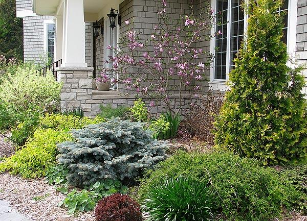 низкорослые кустарники в дизайне сада