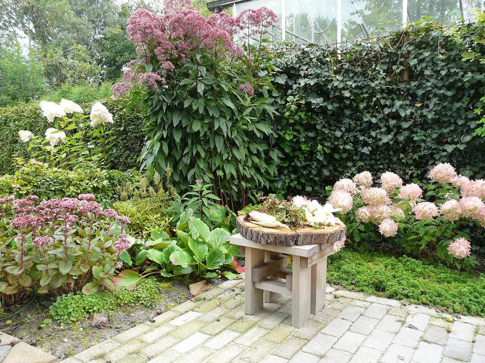 Посконник пятнистый в дизайне сада