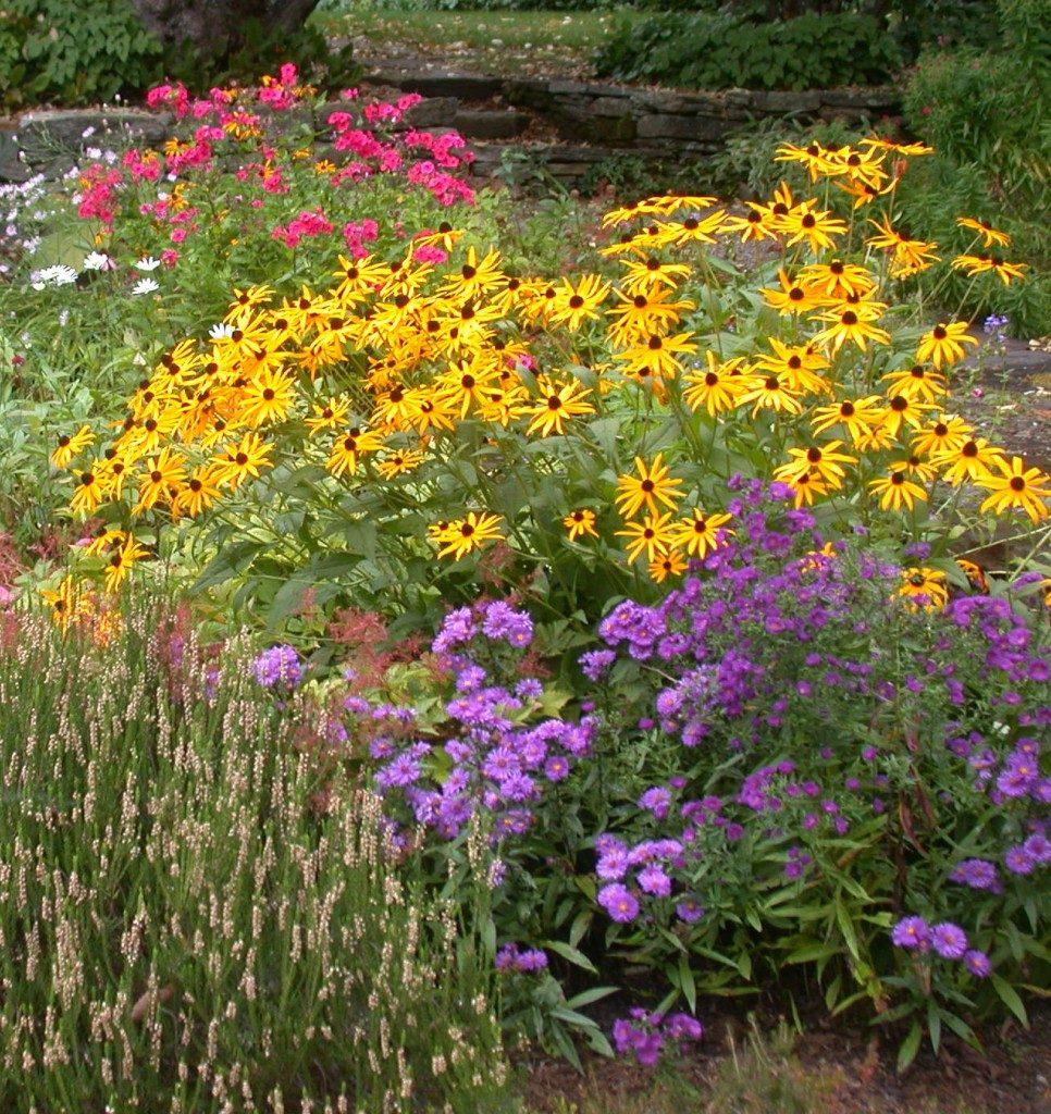 Растения которые растут в засушливых местах