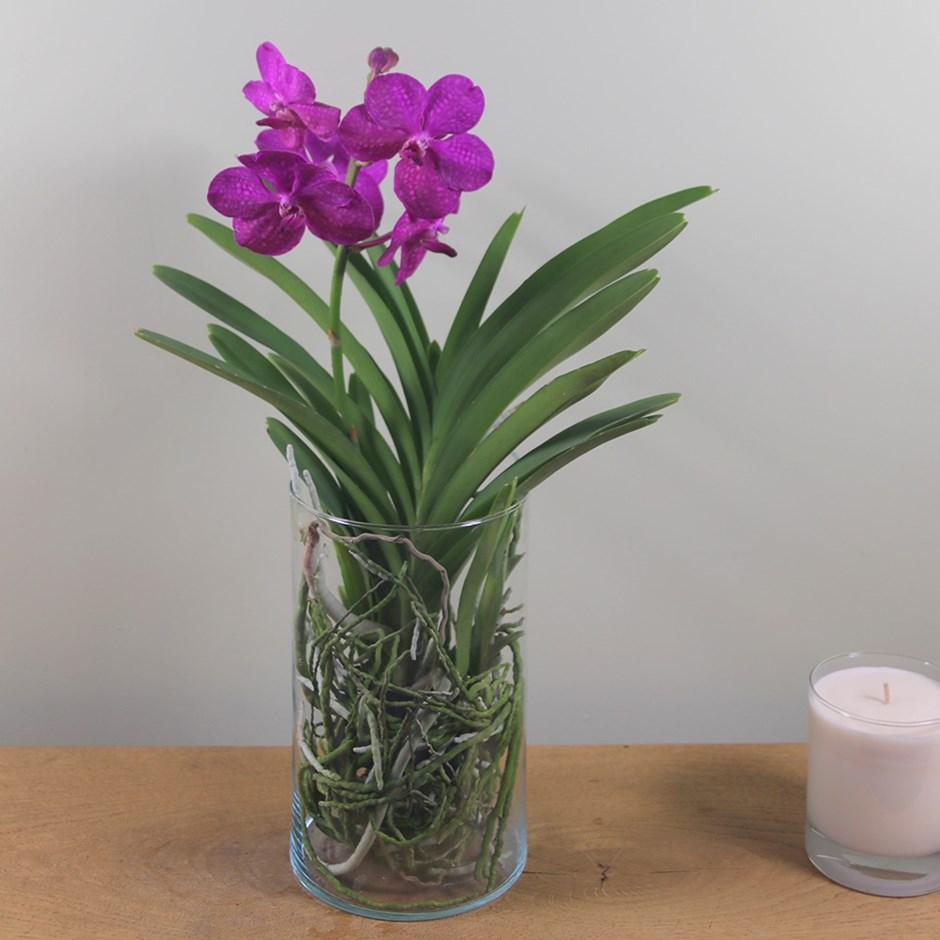 орхидея ванда в стекле_фото