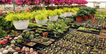 питомник растений в защищенном грунте_фото
