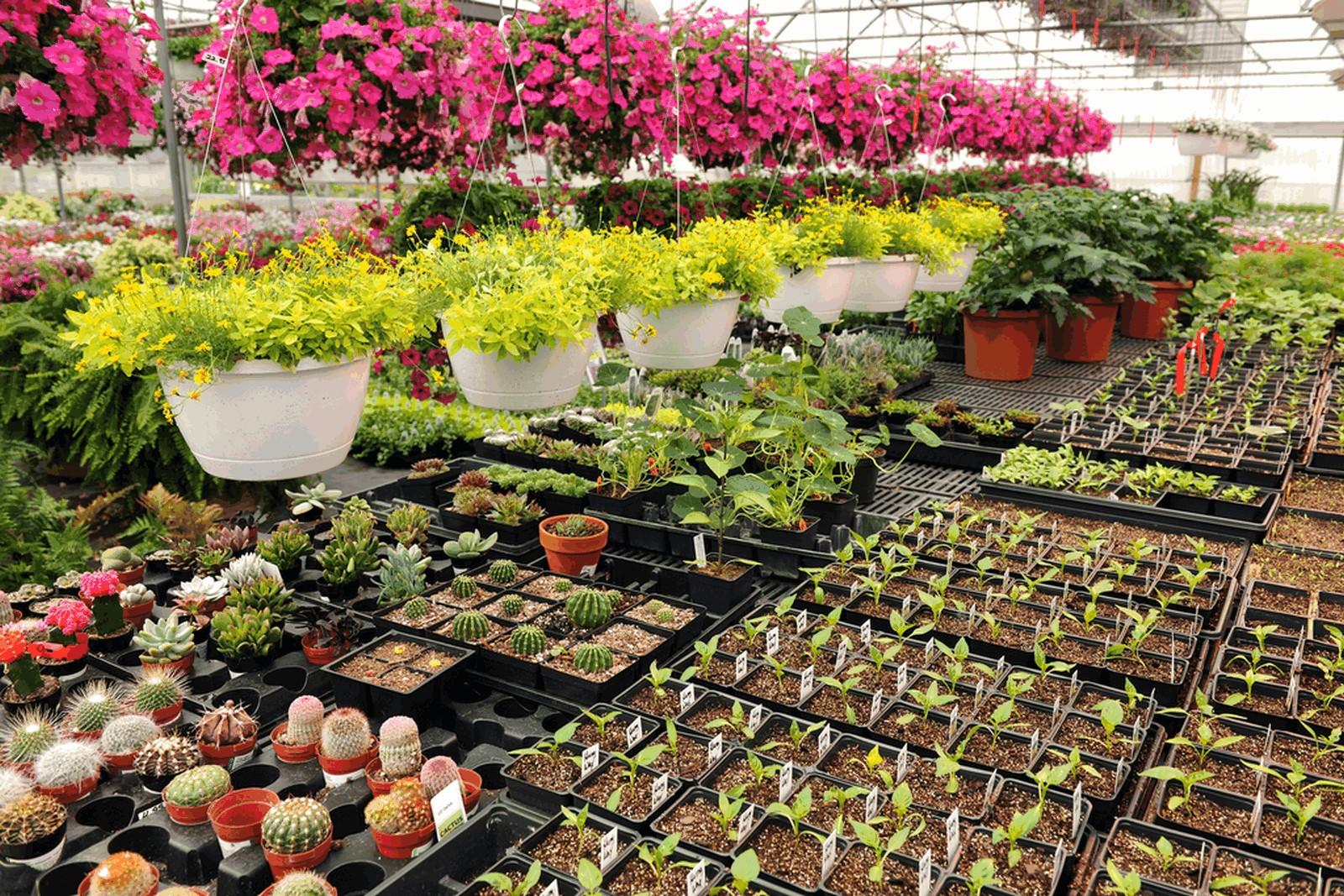 Купить саженцы цветов москва, оптом