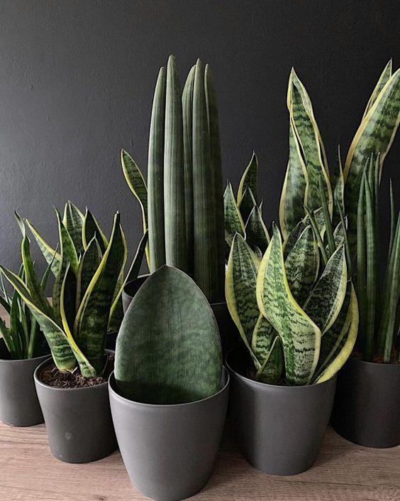 щучий хвост растений_фото