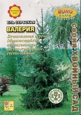 Купить семена ели сербской